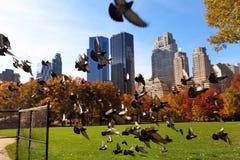 Central Park no dia ensolarado, New York City Imagens de Stock