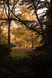 Central Park, NY die - een fiets berijden op een Dalingsdag Royalty-vrije Stock Afbeeldingen