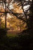 Central Park, NY - montar una bici en un día de la caída Imágenes de archivo libres de regalías
