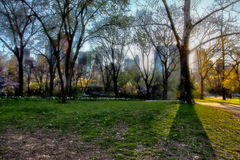 Central Park, NY, USA. A sunny afternoon at Central Park, catching some backlight Royalty Free Stock Image