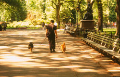 Central park nyc. Scenics of central park in new york city Stock Image
