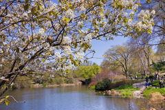 Central Park NYC Royaltyfri Fotografi