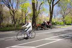 Central Park NYC Royaltyfria Foton