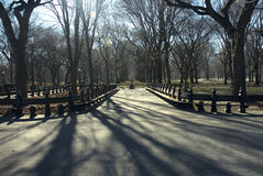 Central Park NYC im Winter Stockfotografie