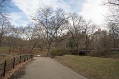 Central park, paths, elms, beginning of February. View to paths in Central Park, New York Stock Photos