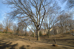 Central park, paths, elms, beginning of February. View to paths in Central Park, New York Royalty Free Stock Photography