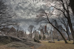 Central park, paths, elms, beginning of February Royalty Free Stock Images