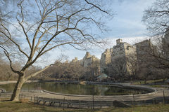 Central park, paths, elms, pond, beginning of February Royalty Free Stock Images