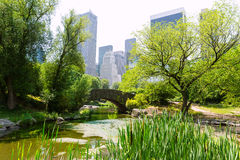 Central Park The Pond Manhattan New York Stock Image