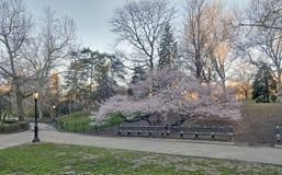 Central Park, primavera de New York City Imágenes de archivo libres de regalías