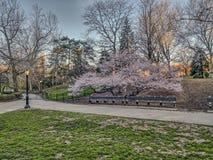 Central Park, primavera de New York City Foto de archivo