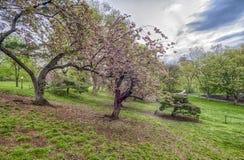 Central Park, primavera de New York City Imagen de archivo