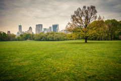 Central park at rainy day Royalty Free Stock Image