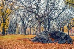 NY Central park at rainy day Stock Images