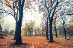 NY Central park at rainy morning Stock Images
