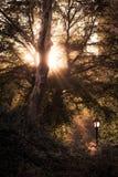 Central Park - raios do sol que passa através dos ramos das árvores Fotografia de Stock Royalty Free
