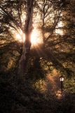 Central Park - rayos del sol que pasa a través de las ramas de árboles Fotografía de archivo libre de regalías
