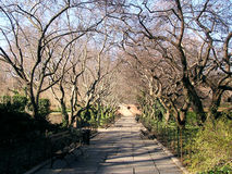 Central park scenery 2. Solitary path and benches in Central Park, New York  waiting for tourists Stock Photography