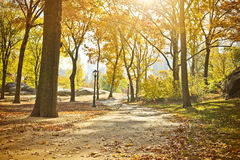 Central Park Scenic in Autumn, New York Stock Photography
