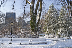 Central Park and Snow Royalty Free Stock Photo