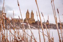 Central Park after the Snow Strom Linus Stock Photography