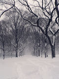 Central Park Snowstorm Stock Photo