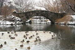 Central Park snowvinter Royaltyfria Foton