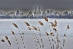 Central Park som är västra i vinter Arkivfoton