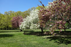 Central Park in the Spring Stock Photo