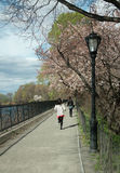 Central Park Spring Jogging Path NYC USA stock photo