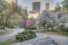 Central Park spring Royalty Free Stock Photos