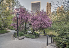 Central Park spring Royalty Free Stock Image