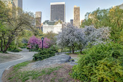 Central Park spring Royalty Free Stock Photography