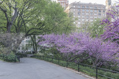 Central Park spring Royalty Free Stock Images