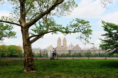 Central Park Spring. Central park in spring, New York City, USA. People running exercise  in the park royalty free stock photo