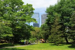 Central Park Spring. Central park in spring, New York City, USA. Tourists walking in the park in a sunny day stock images