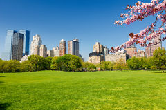 Central park at spring, New York Royalty Free Stock Image