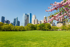 Central park at spring, New York Stock Images