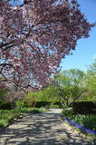 Central Park in the spring, NYC Stock Images