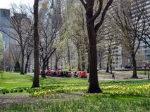 Central Park in Spring, NYC, NY, USA stock photos