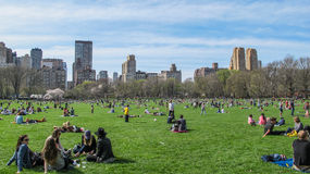 Central Park in Spring Stock Image