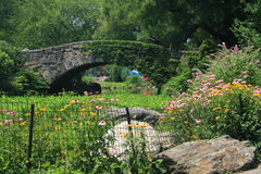 Central Park in Summer Royalty Free Stock Image