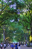 Central Park in the summer, New York City, USA. Royalty Free Stock Photography