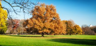 Central park at sunny autumn day Stock Images