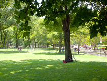 Central park at sunny day Royalty Free Stock Images