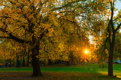 Central Park sunset fall autumn. Trees Stock Images