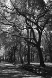 Central Park Trees Royalty Free Stock Photography