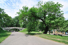 Central Park Trees and Bridge Royalty Free Stock Photo