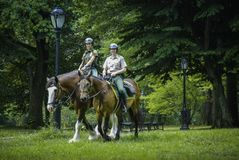 Security guards riding horses in the central park ,New York royalty free stock photography