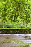 Central Park vert avec des fleurs Photos libres de droits